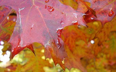 De natuur die troost: mooie blog en stiltewandelingen